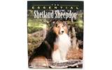 The Essensial shetland sheepdog