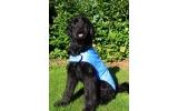 Cool Dog Cooling Coat Large Blue 64cm