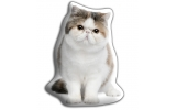 Adorable Exotic Short Haired Cat Cushion