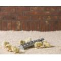 Rose Chick Trough Feeder 38 x 8 x 6.5cm
