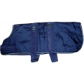 Animate 