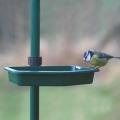 CJ Wildlife Water Dish (Bird Buffet System)