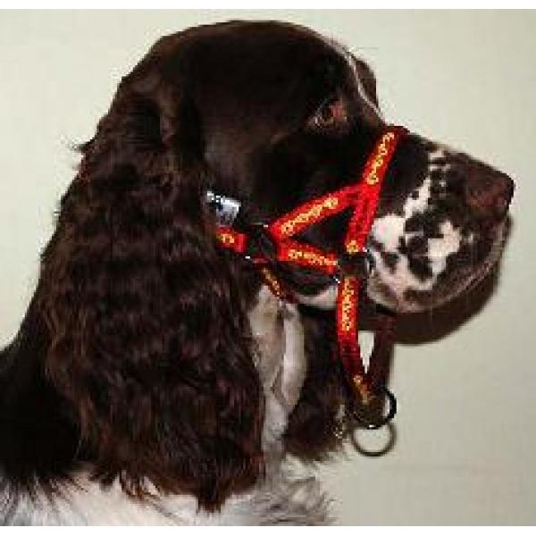 Dogmatic Dog Collar