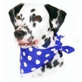 Cosipet Blue Polka Dot Bandana For Dogs