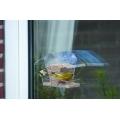 CJ wildlife Crete Window feeding House